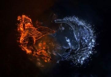Dragon Beautiful Phoenix Wallpaper
