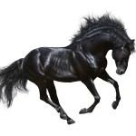 Running Black Wallpaper Horse