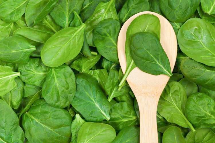 Špinača nas na vrtu čaka med prvo zelenjavo, ki jo lahko nabiramo spomladi, in prav tako med zadnjo, ki jo nabiramo že skoraj v poznih zimskih mesecih. Velja za izjemno zdravo živilo, polno pomembnih vitaminov in mineralov ter antioksidantov.