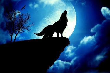 Moon Dark Wolf Wallpaper
