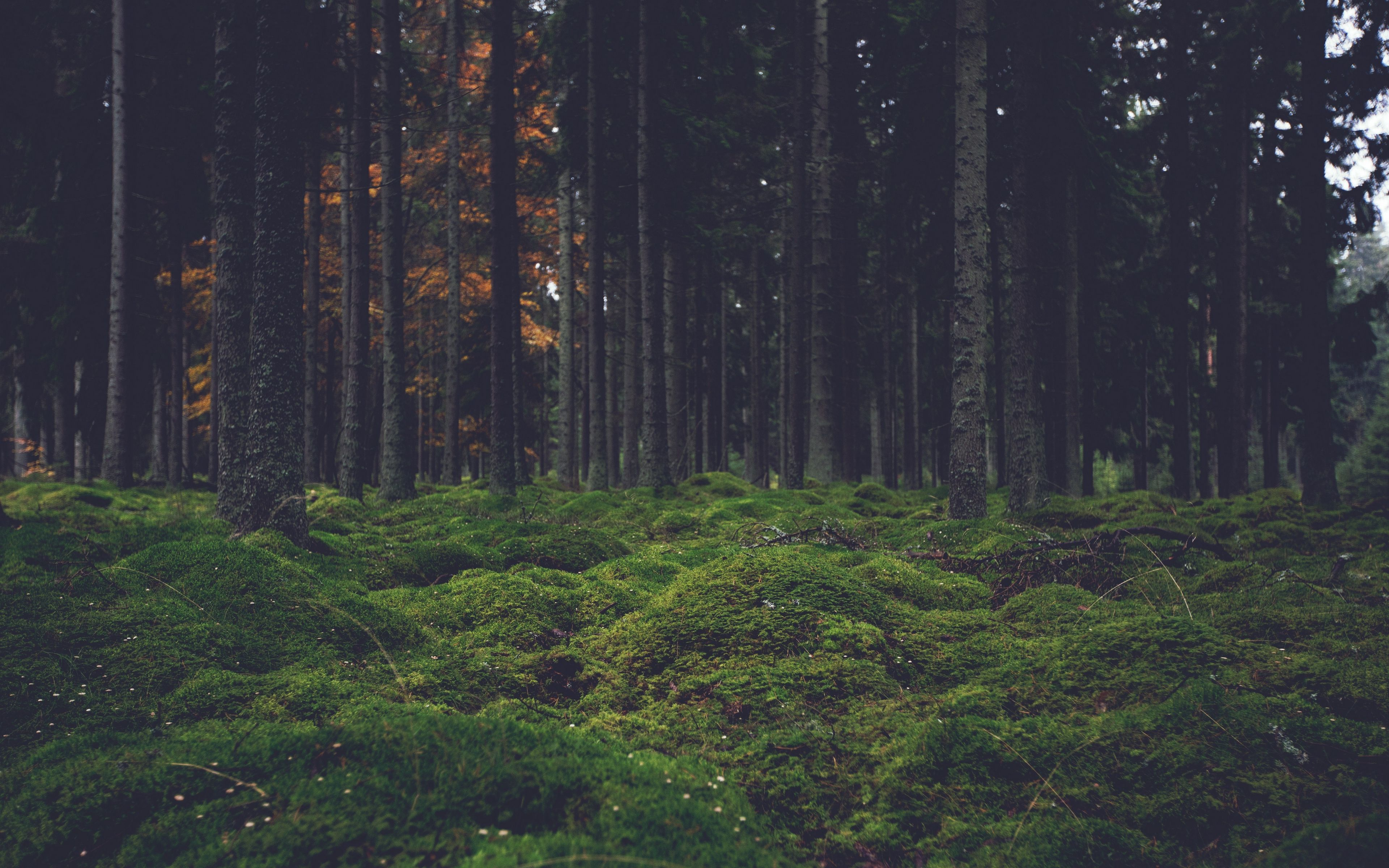 Check out this fantastic collection of forest green wallpapers, with 51 forest. Aesthetic Forest Wallpaper Pc - allwallpaper