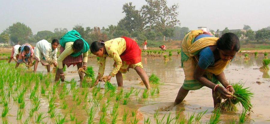 Prime Minister Agricultural Irrigation Scheme, e krishi yantra, dbt agriculture