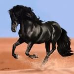 Running Black Horse Wallpaper Hd