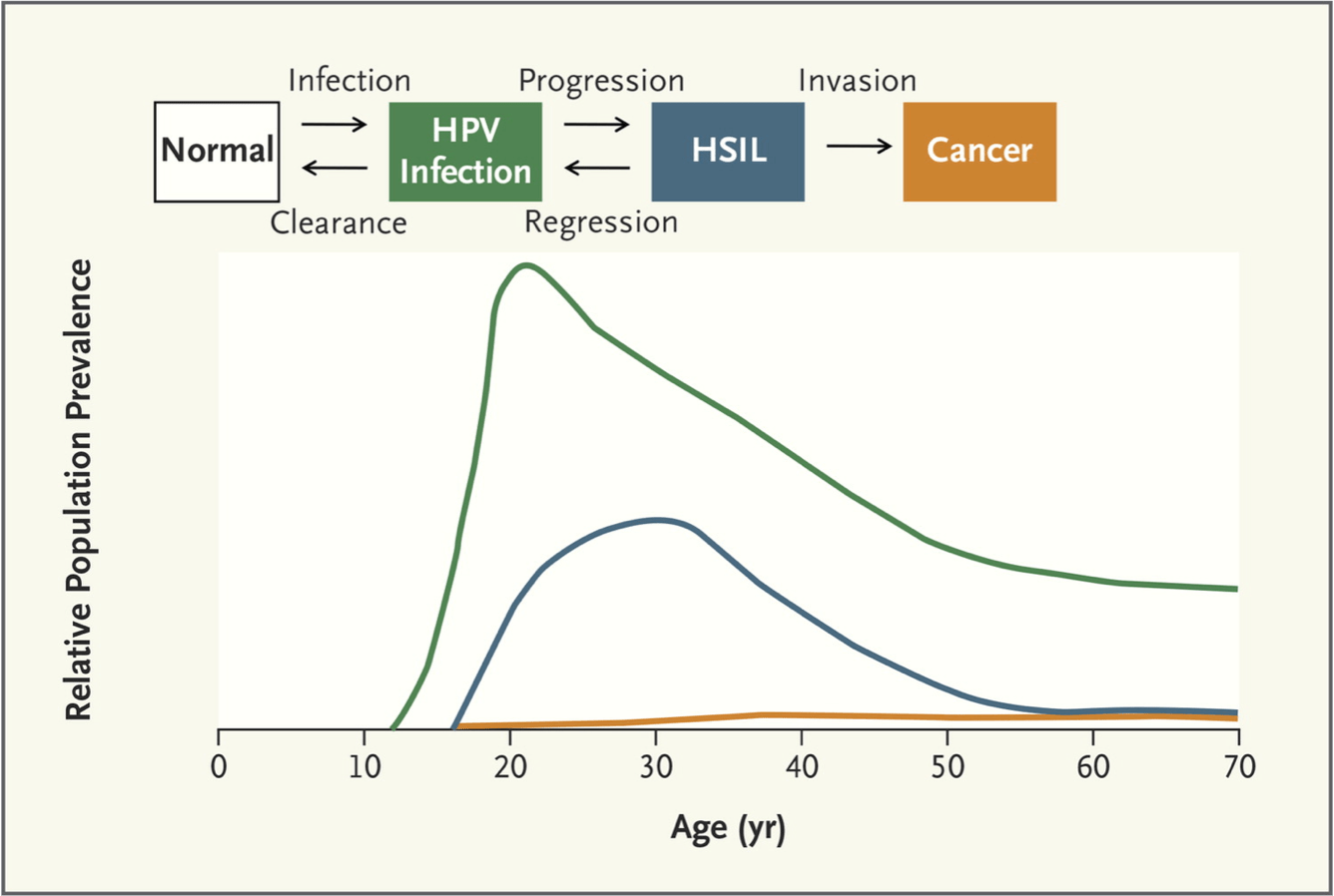 hight resolution of natural history of hpv infection and cancer as shown at top the bottom graph shows figure 6 age at peak prevalence for each stage in cervical