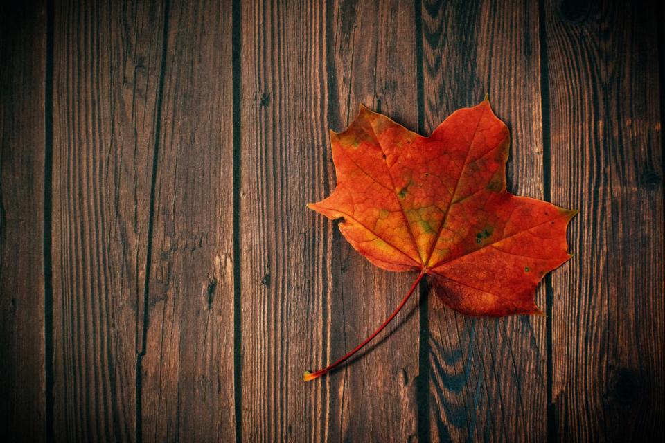 Autumn Falling Leaves Wallpaper Free Photo Of Autumn Fall Leaf Stocksnap Io