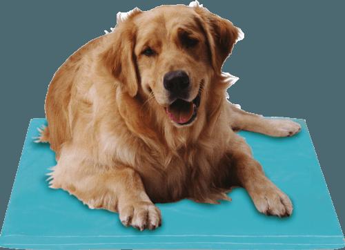 tapis rafraichissant pour chien canine cooler moyen