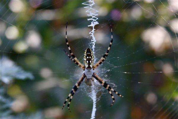 Spider Veins ' Crawling Legs