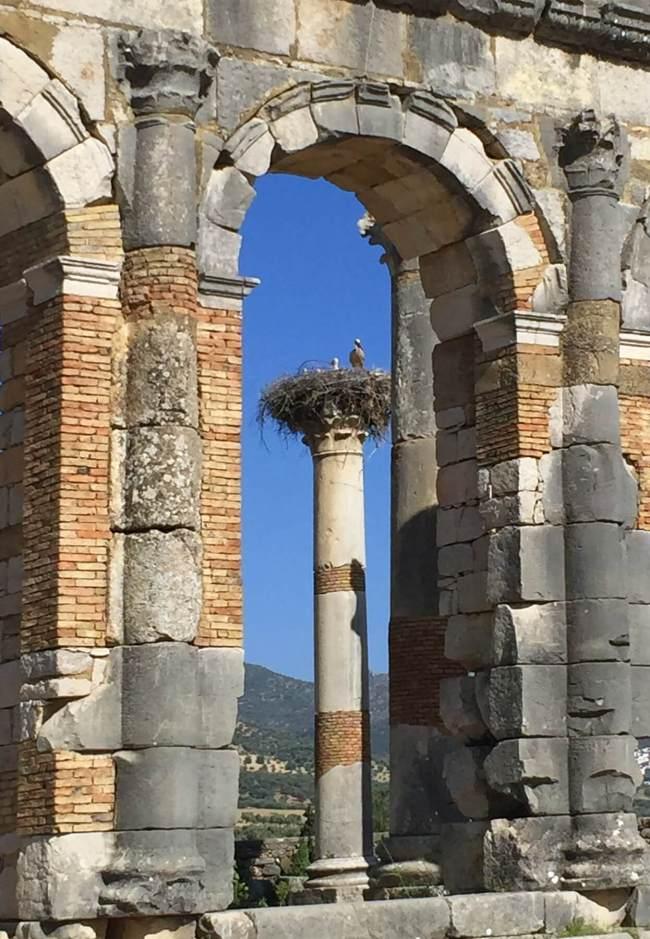 Les cigognes et leurs nids massifs sont très répandus au Maroc.