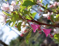 Fuschia pink flower earrings with Swarovski crystals ...
