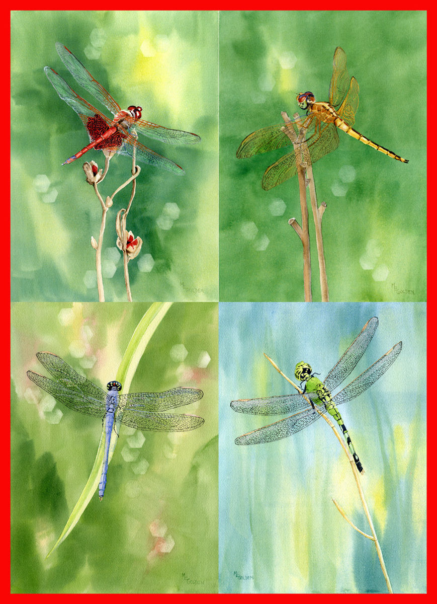 Dragonfly Watercolor Painting Collection