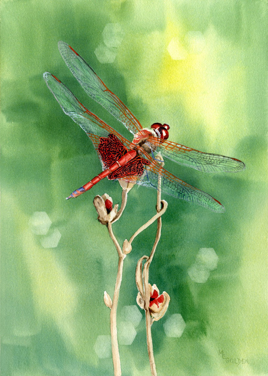 Red Dragonfly Original Watercolor - Golden