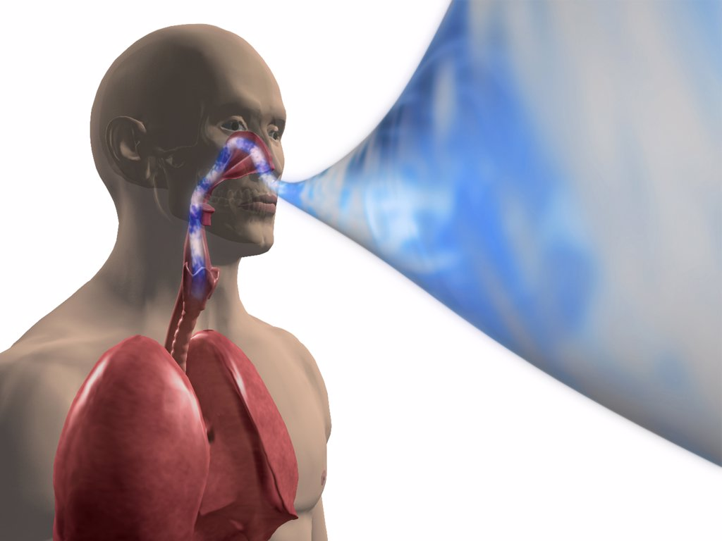 lungs human anatomy diagram sinamics g120 pm240 wiring showing a man breathing air into his stock photo 1428r-361 : superstock