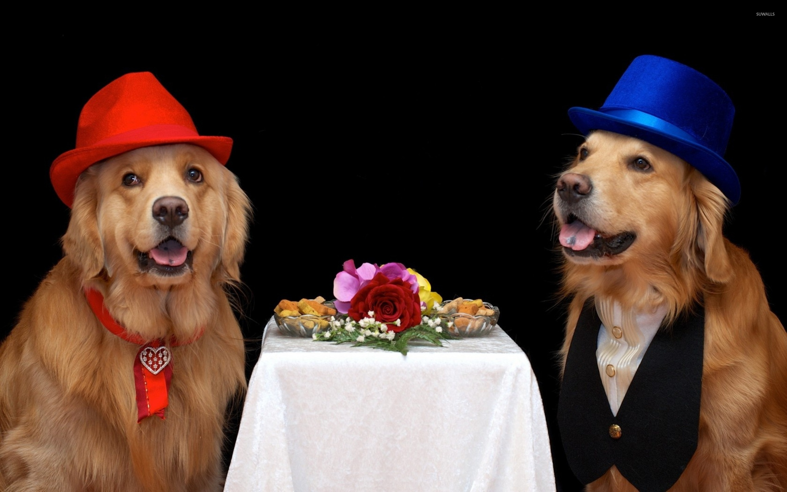golden retriever wearing hats