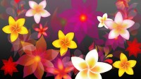 Colorful Flowers Backgrounds Wallpapers Pictures to Pin on ...