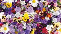 Colorful flowers wallpaper - Flower wallpapers - #53967