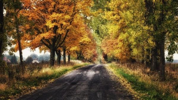 Nature Forest Desktop Background Fall Autumn