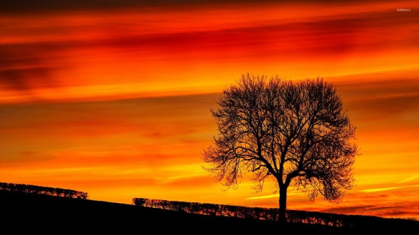 Tree Silhouette Sunset Painting