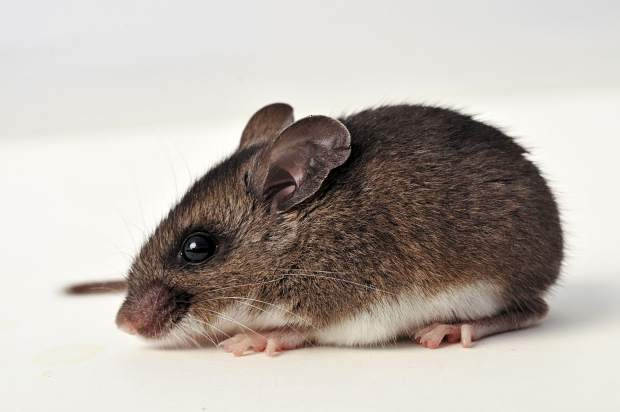 Washoe County confirms second case of hantavirus in less than 1 ...