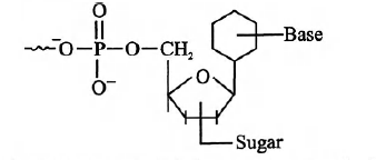 A unit in nucleic acid which contains 'base-sugar phosphat