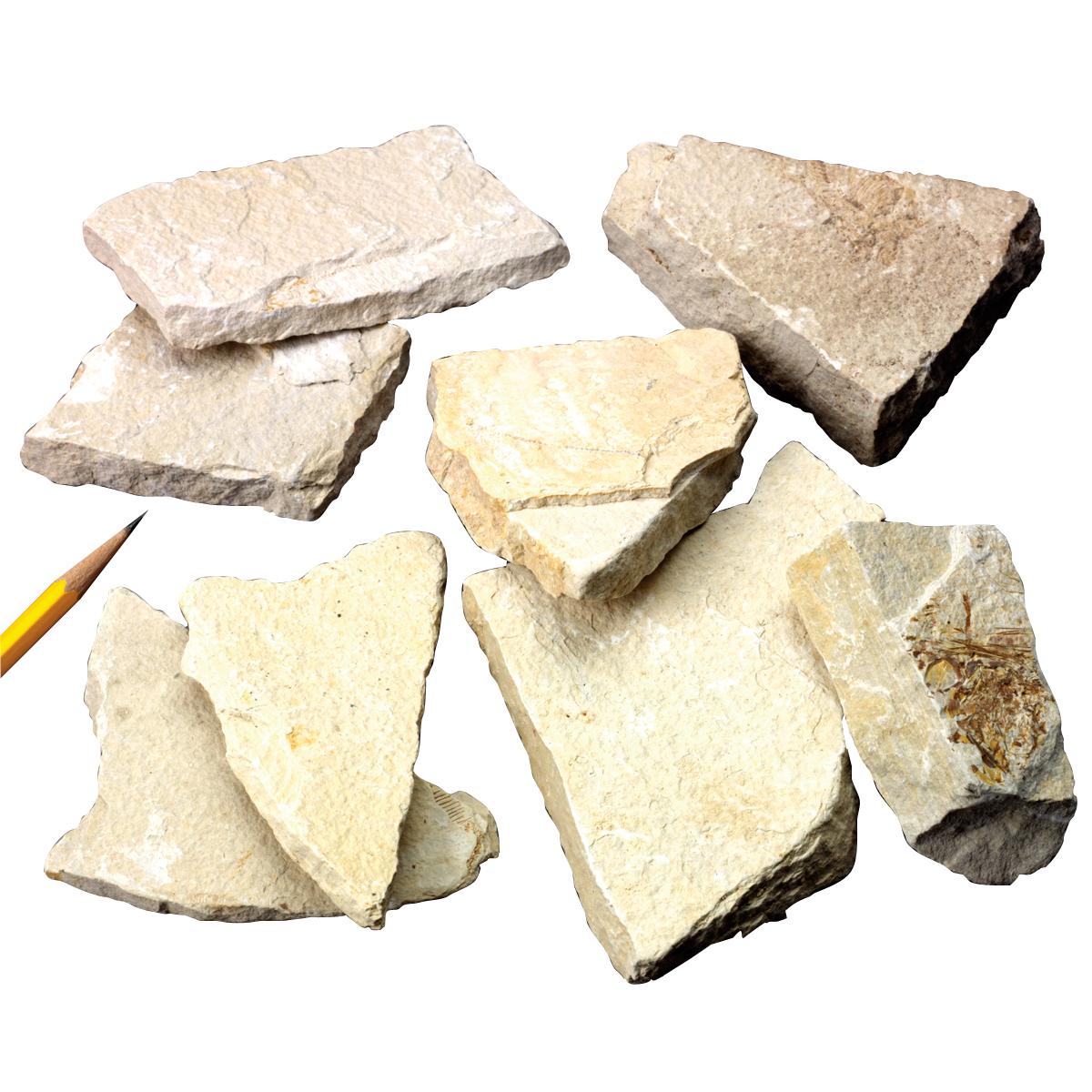Sedimentary Rocks Siltstone 1 Kg