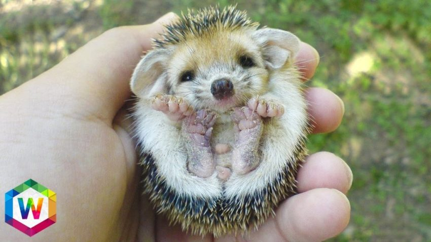 cute pet images