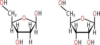 Dna deoxyribonucleic acid definition. Dna. 2019-02-11