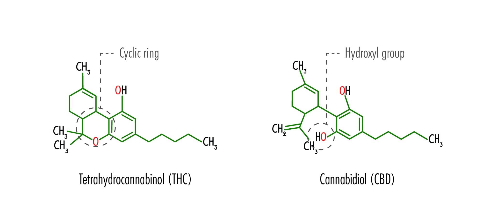 hight resolution of the structural formulas of tetrahydrocannabinol thc and cannabidiol cbd including the location