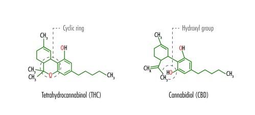 small resolution of the structural formulas of tetrahydrocannabinol thc and cannabidiol cbd including the location