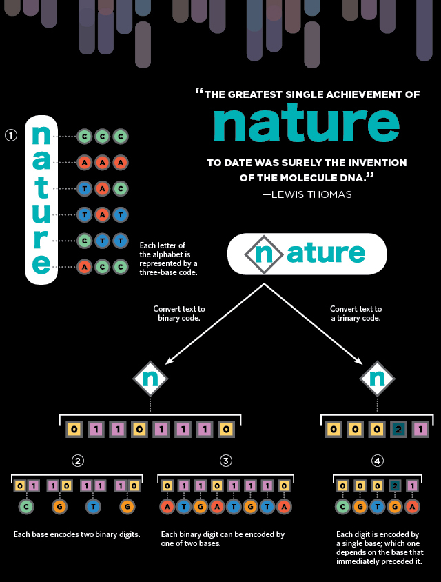 infographic writing with dna