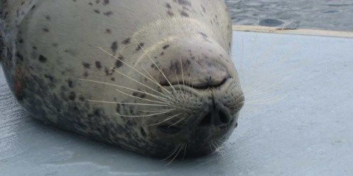 seal whiskers can detect