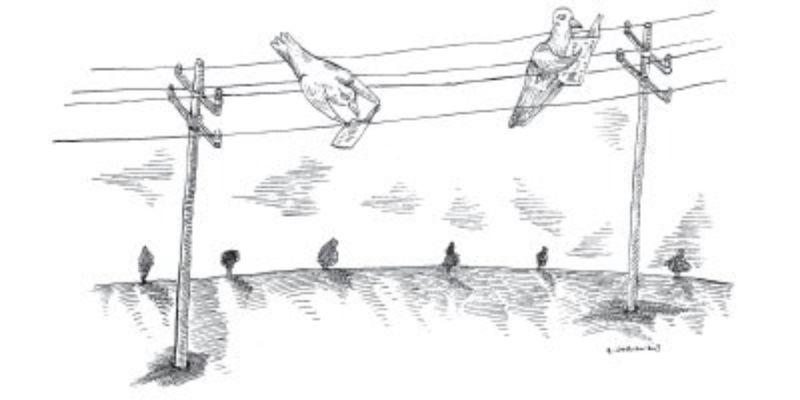 """Birds Have Skills Previously Described as """"Uniquely Human"""