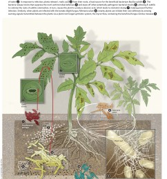 a look at the soil microbiome view full size  [ 2435 x 2798 Pixel ]