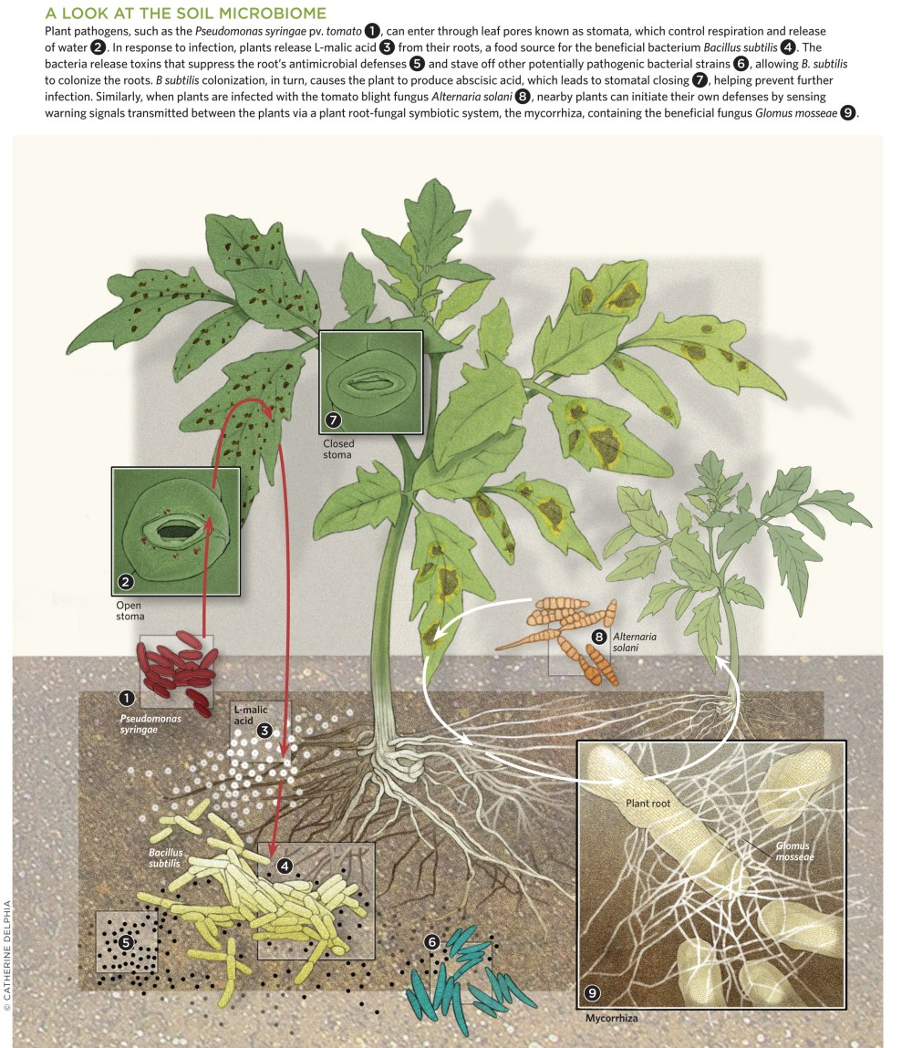 medium resolution of a look at the soil microbiome view full size