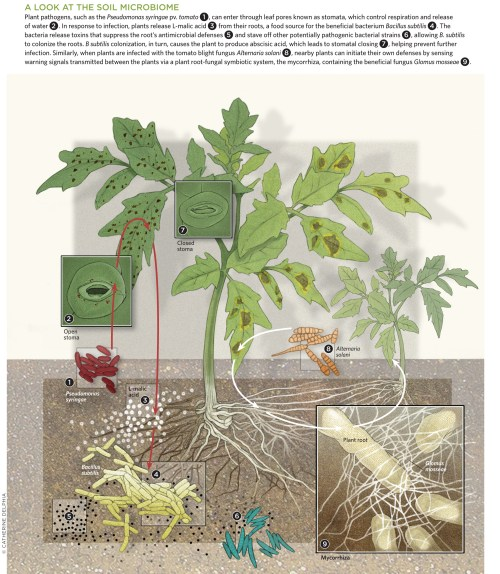 small resolution of a look at the soil microbiome view full size
