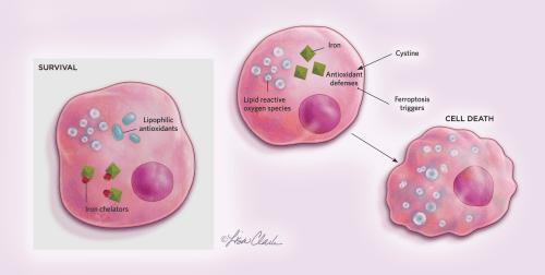 small resolution of ferroptosis