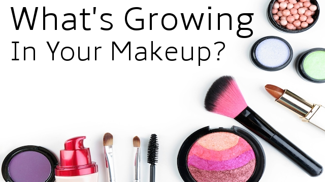 Are There Dangerous Bacteria Growing in Your Makeup Tips