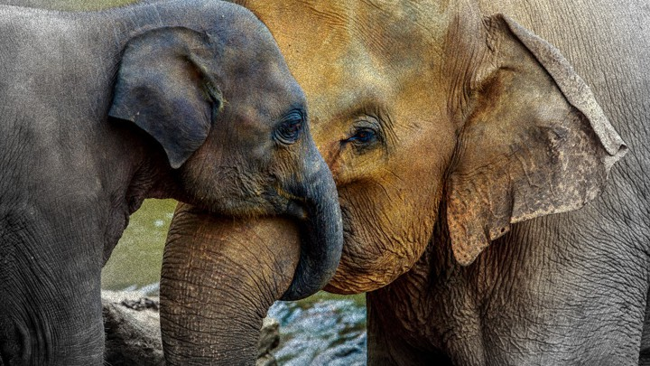 being an elephant mom