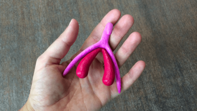 A Life Size 3 D Printed Model Of The Clitoris Developed By Odile Fillodmarie Docher