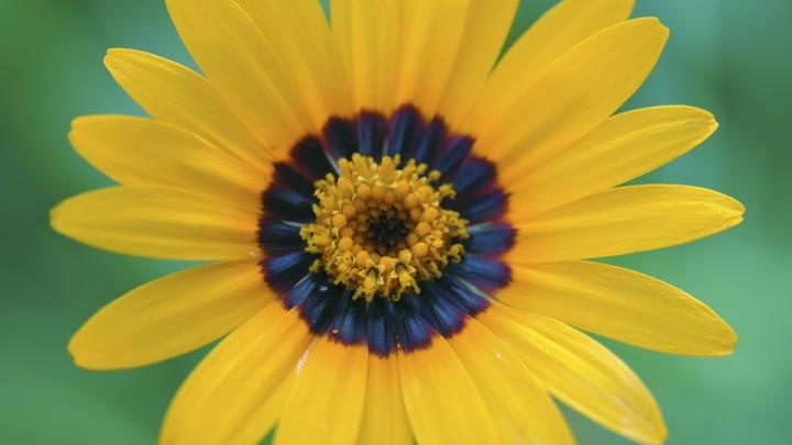 flowers have secret blue