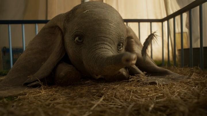 Cute Colour Wallpaper Tim Burton S Dumbo Remake For Disney Soars Review The