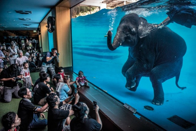 A roomful of spectators looks through huge glass walls at an elephant performing underwater.