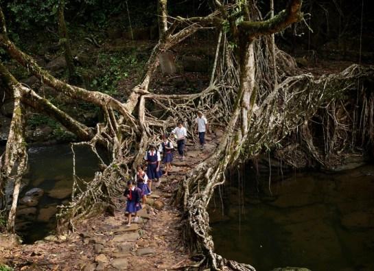 Image result for 1. Living Bridges in Cherrapunji, India