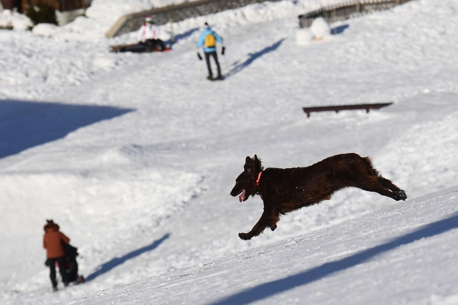 A dog bounds down a snowy hill.