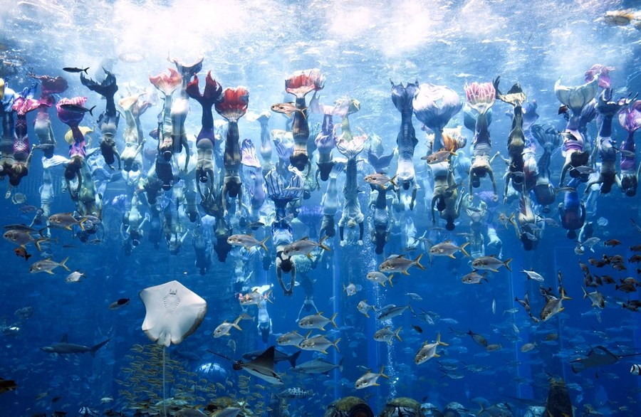 Dozens of people swim together in a giant aquarium pool, all dressed as mermaids.