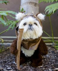 Dogs Celebrate Star Wars Day... the Results Are Hilarious ...