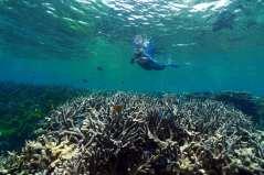 barrier reefs coral loss માટે છબી પરિણામ