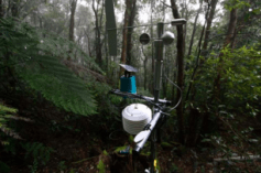 A sensing node in Springbrook National Park. CSIRO, Author provided