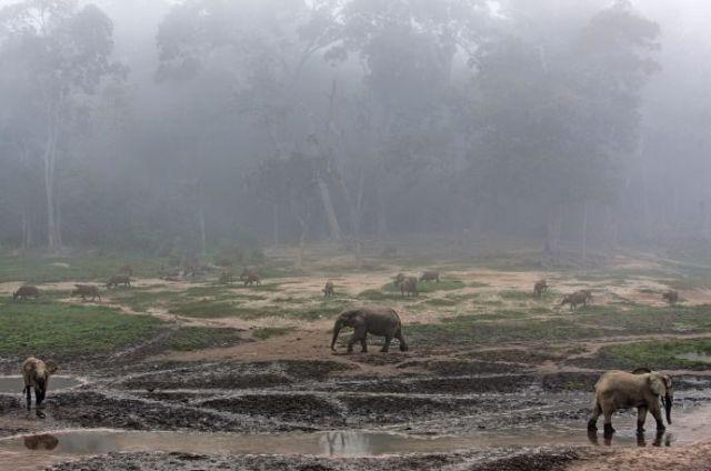 Dzanga-Ndoki National Park