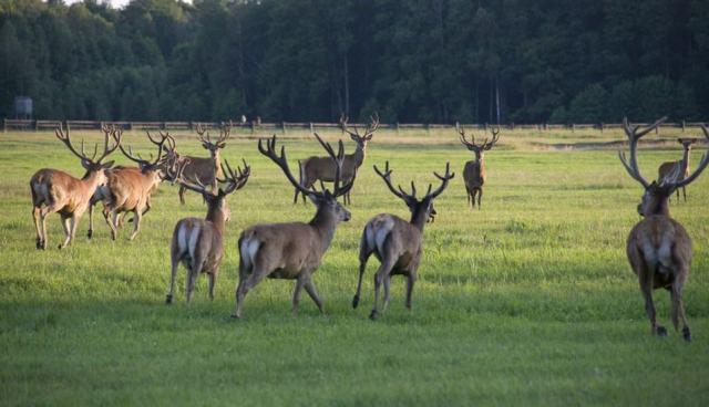 Pripyatsky National Park
