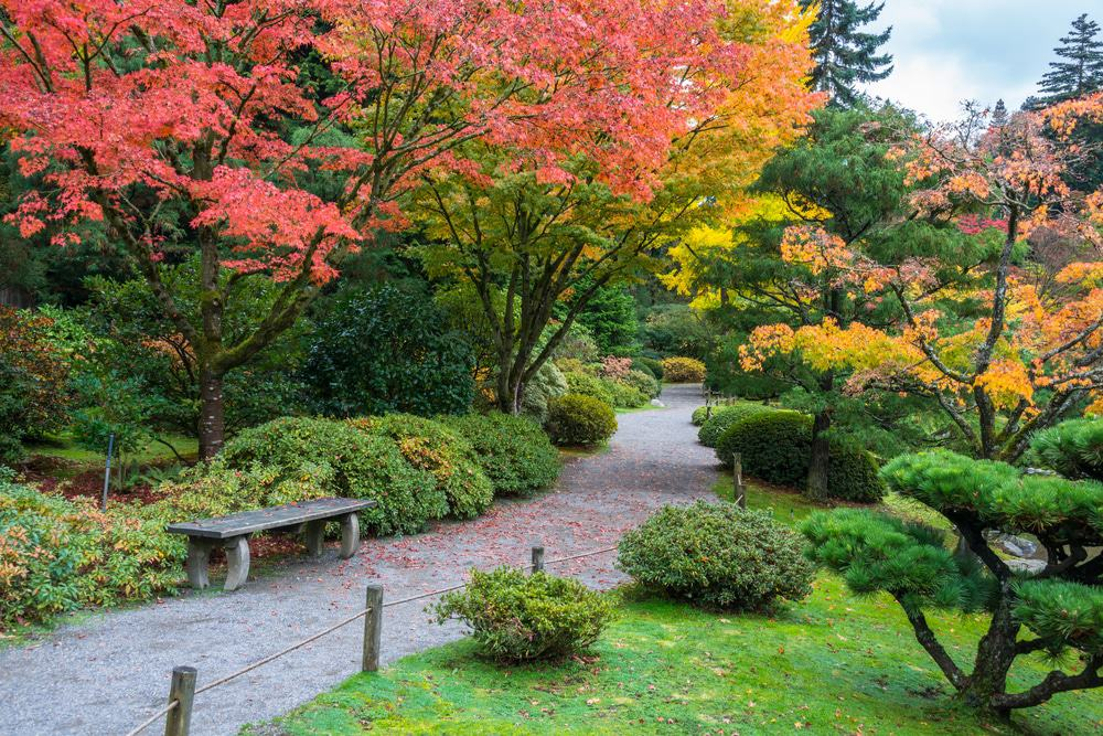 Arboreto del parque Washington, Seattle